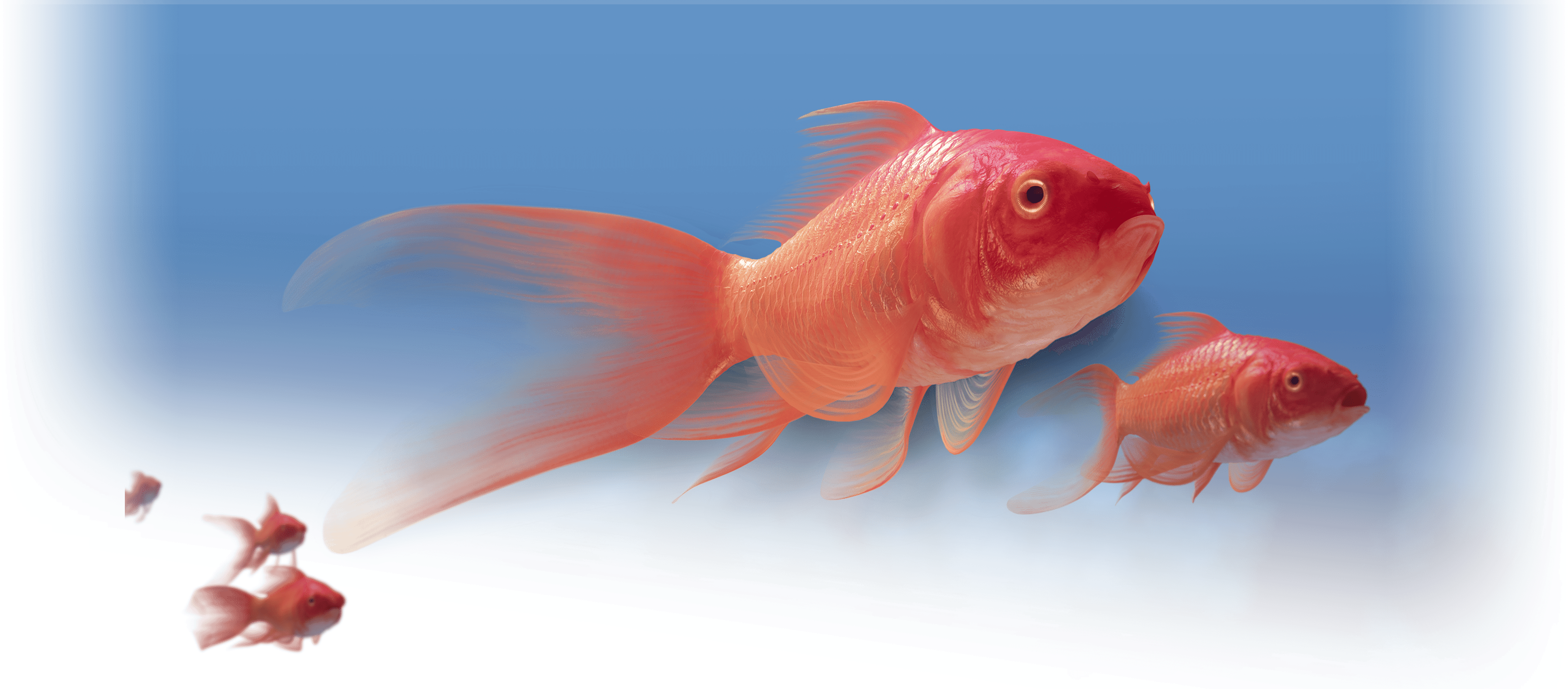 Pradaxa-red-fish Hero Image